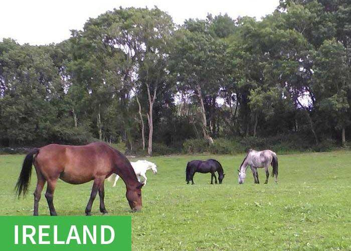 IE: 4 Ower Equestrian Centre